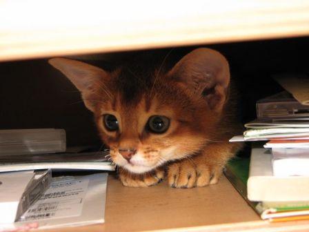 verdens minste kattunge